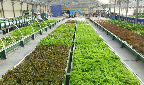 ouroboros farm