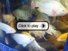 growhaus fish