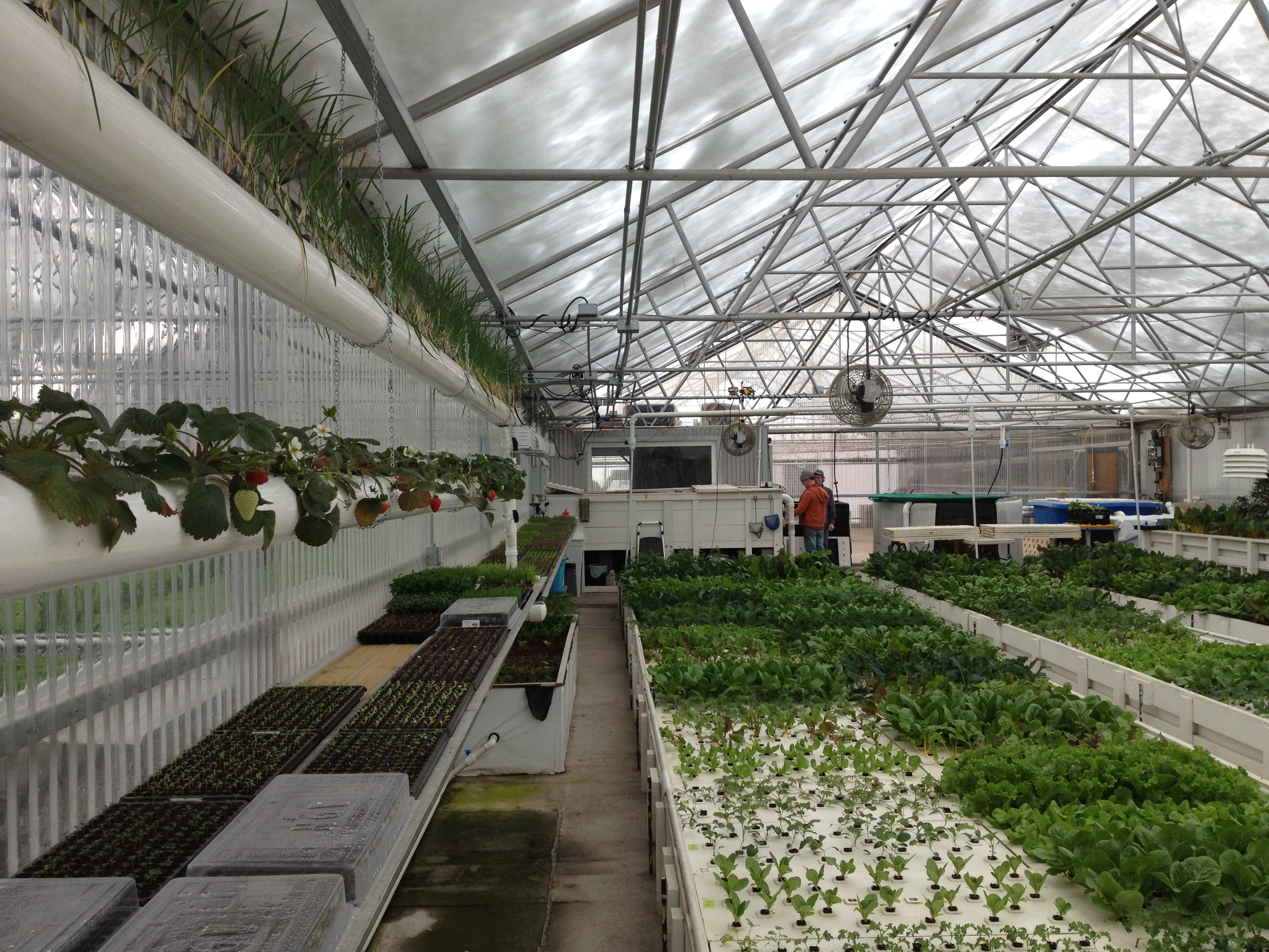 Agricultural Aquaponics